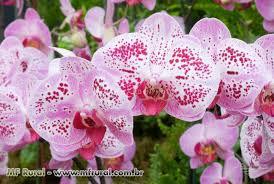 como plantar orquideas