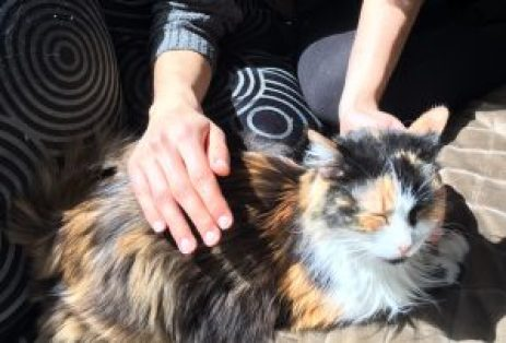 Beneficios del Reiki para Gatos Enfermos