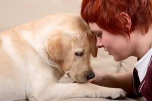 reiki para perros