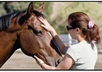 Entre las innumerables aplicaciones del Reiki está la de los animales, hoy hablaremos específicamente del Reiki para caballos, uno de los más susceptibles a esta práctica. El caballo puede ser considerado uno de los animales mas susceptibles a las energías que lo rodean, bien sea emanada por las personas o simplemente por el mismo ambiente. Es por ello que los caballos la mayoría de las veces entienden el estado emocional de las personas a su alrededor y reaccionan según este. En cuanto a su jinete, dueño o persona más cercana llega a desarrollarse una relación emocional y anímica muy estrecha. Por ejemplo; si esta persona si esta persona se encuentra nerviosa o ansiosa contagiara al caballo de tales emociones, siendo capaz de influir tanto en la salud como en el estado emocional del animal, trayendo como resultado bloqueos energéticos. Es entonces donde entra en juego el Reiki como una poderosa herramienta de sanación capaz de disolver estos bloqueos y ayudar al caballo a sanar física y emocionalmente. ¿Cómo Funciona El Reiki En Los Caballos? El Reiki en animales y plantas funciona de la misma manera que en los seres humanos, en el caso de los caballos su sistema energético es bastante similar al de las personas. Al darle Reiki tanto en las partes afectadas como en todos los órganos del animal se equilibran todos los chakras del caballo, de manera que este pueda no solo sanar sino beneficiarse de la energía universal de innumerables formas. ¿Cómo Hacer Reiki Para Caballos? El caballo puede comenzar a recibir Reiki desde el momento de su nacimiento si así lo desea su dueño, pues esta terapia es totalmente natural, sin ningún tipo de consecuencias o daños adversos. Los caballos al igual que las personas tienen los chakras ubicados a lo largo de su columna vertebral, de manera que el terapeuta debe ir dando Reiki a lo largo del cuerpo, en la cabeza, el cuello, el lomo hasta llegar a la cola. La terapia de Reiki puede darse en un lugar cerrado o bien en un espacio al a