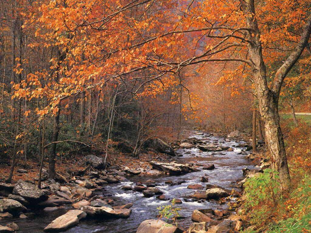 Missouri forest