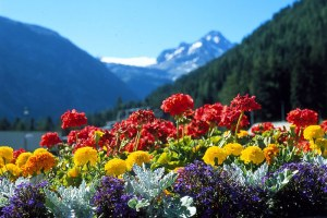 Cuscini fiori di Bach FLOR