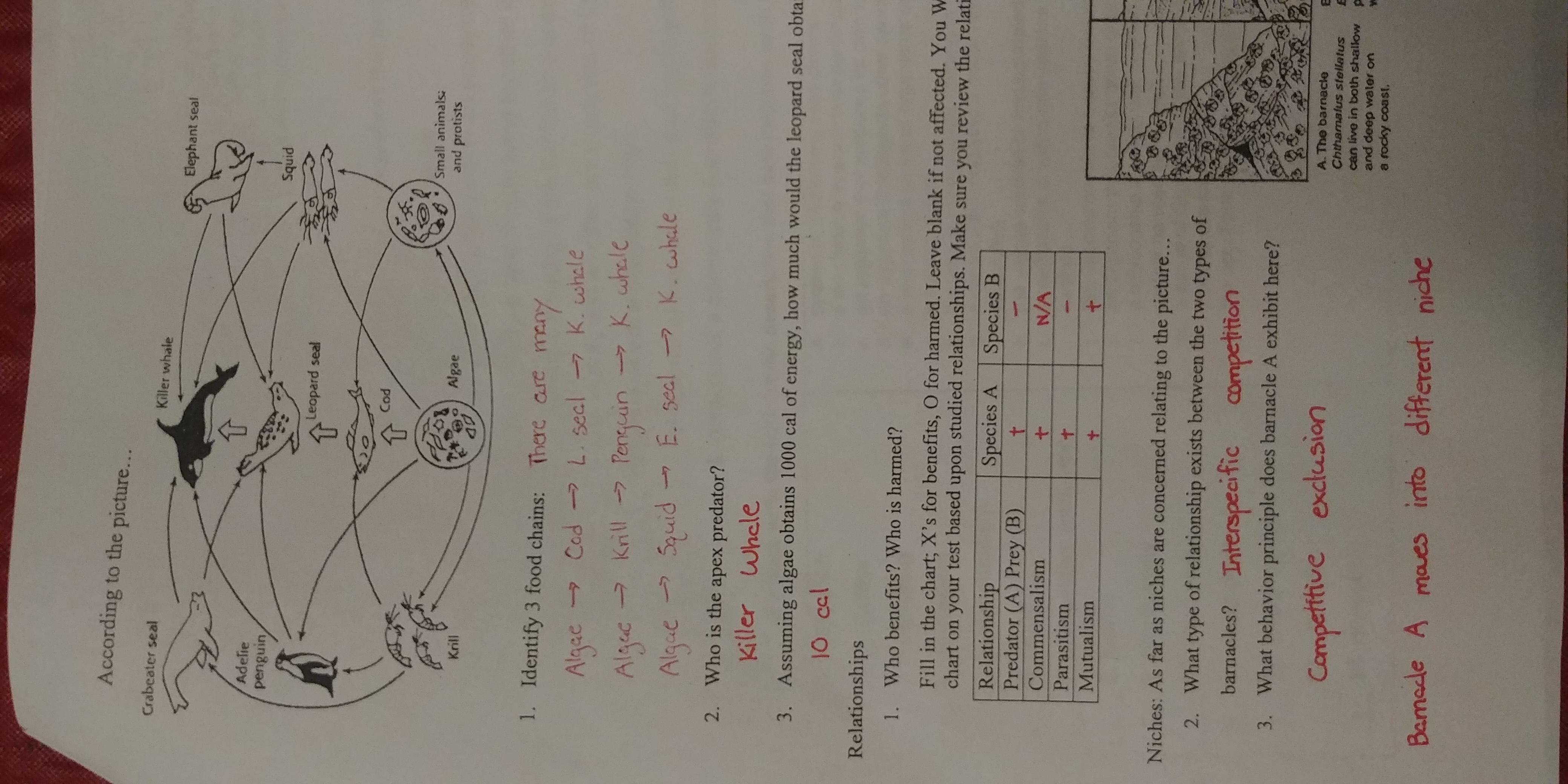 Chiang Rick Biology