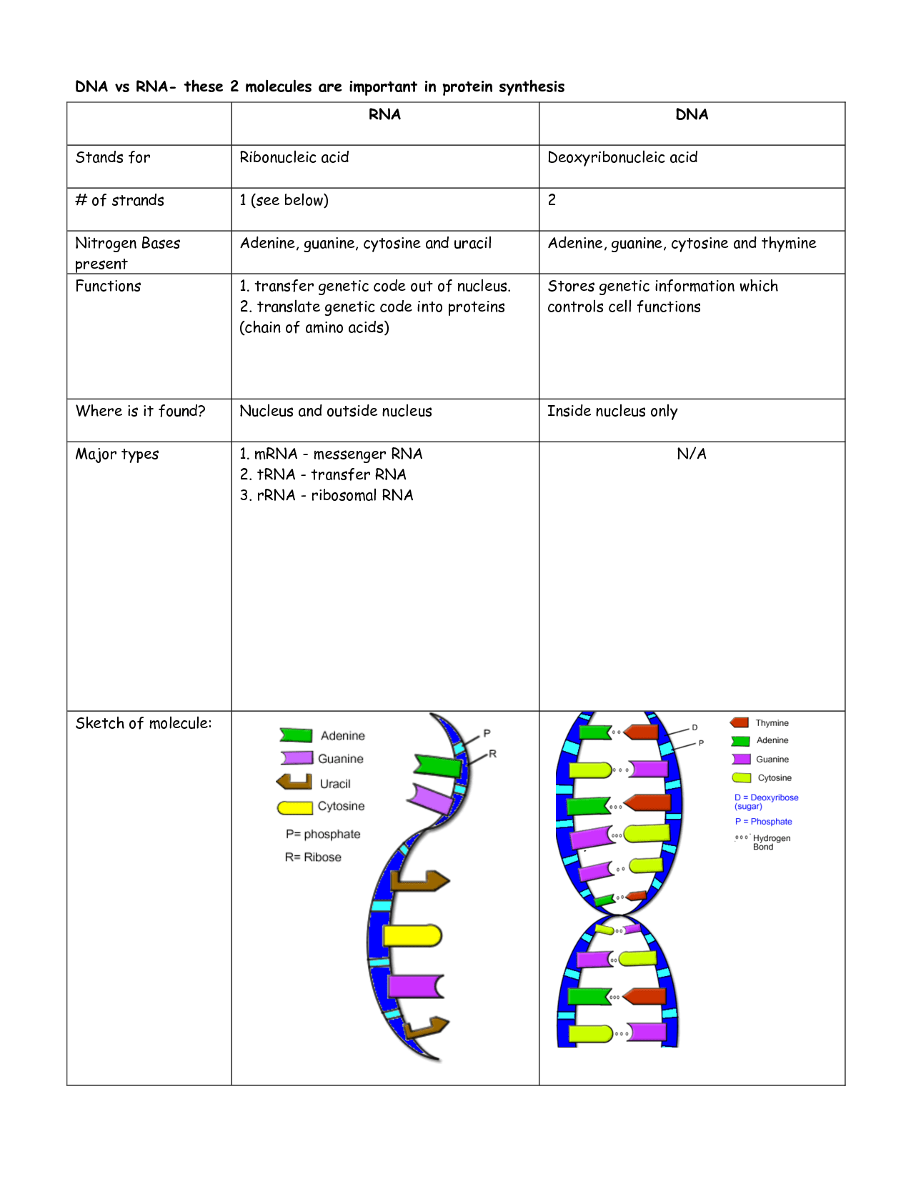 Dna Structure Review Worksheet Answers