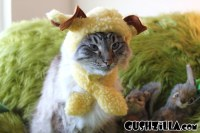 Sheep Costume for Cats & Dogs - A Woof in Sheeps Clothing ...