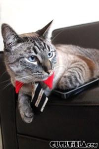 Cat Necktie / Dog Necktie in Business Cat Red from Cushzilla
