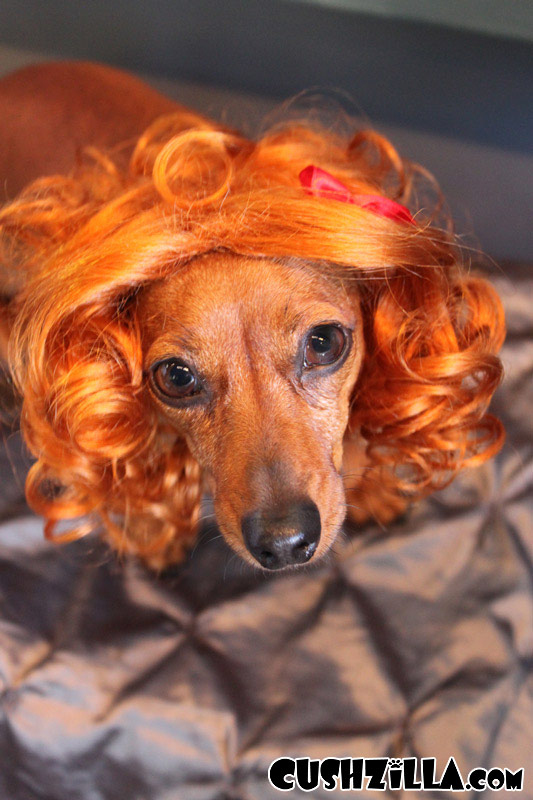 Cat Wig Dog Wig Cushzilla Curly Red Wig For Cats Amp Dogs