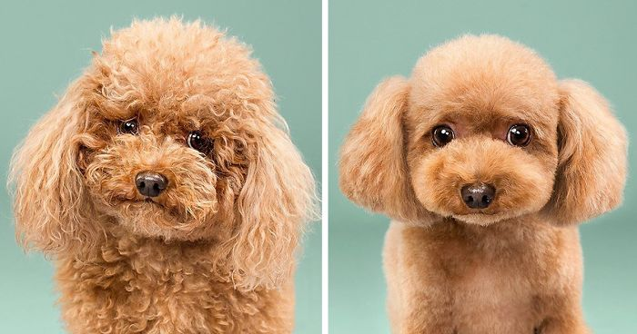 dog-grooming-photography-fb2__700-png.jpg
