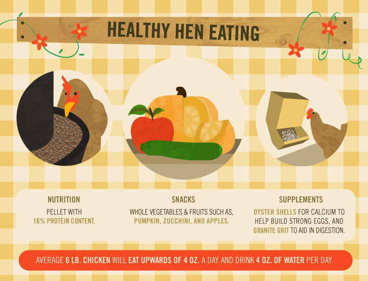 Healthy Hen Eating