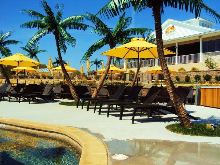 Umbrellas Pool Palm Tree