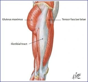 Iliotibial Band and Tensor Fasciae Latae:  Learn Your Muscles
