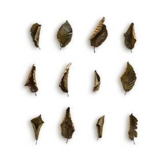 item-cover-hornbeam-4-leaves-pack