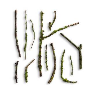 item-cover-small-wooden-sticks-with-moss-pack