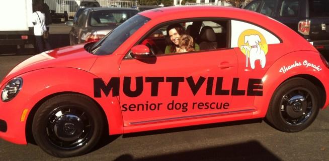 muttville car wrap-10