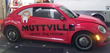muttville car wrap-12