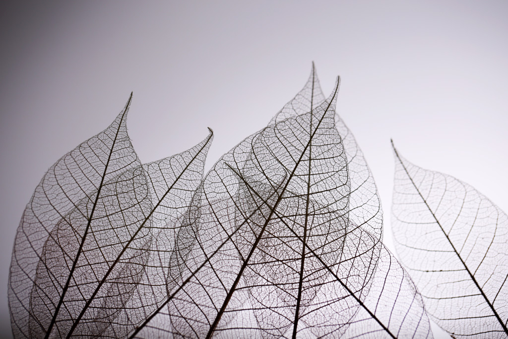 living room art wall small apartment decoration ideas skeleton leaves on grey background, close up - custom ...