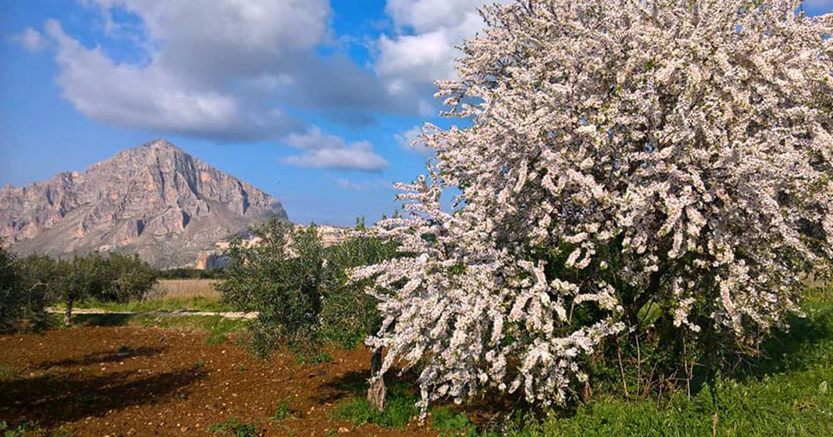Mandorlo in fiore in Sicilia, tra i suoi fiori la storia di un amore eterno.