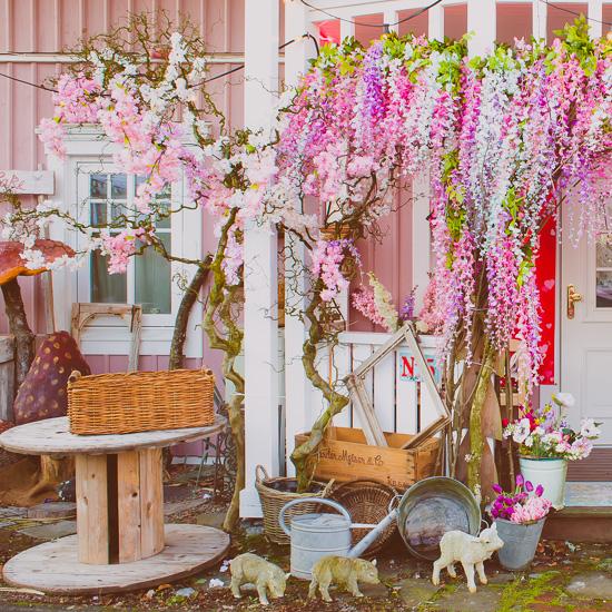 Dieses Jahr habe ich am Eingang vom Rosa Haus ein paar Kirschblüten 'hingemacht'
