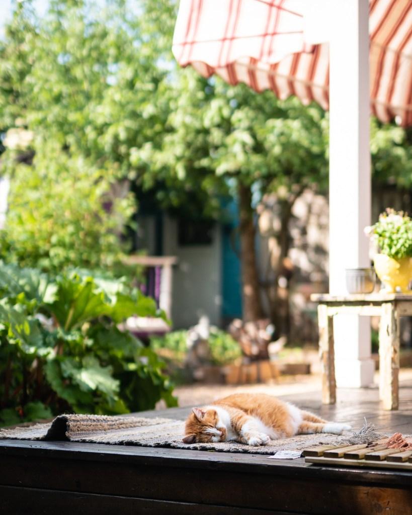 Die Rote Katze macht eine kleine Pause am Rosa Haus