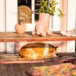 Rote Katze Sonnenplatz