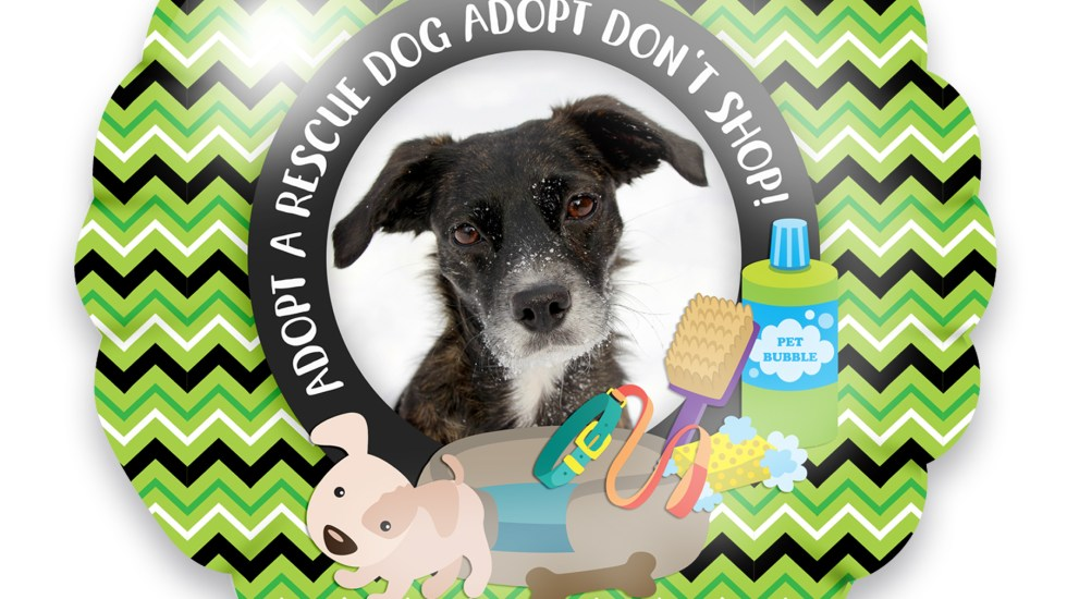 adopt a rescue dog adopt don't shop