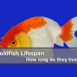 Goldfish Lifespan