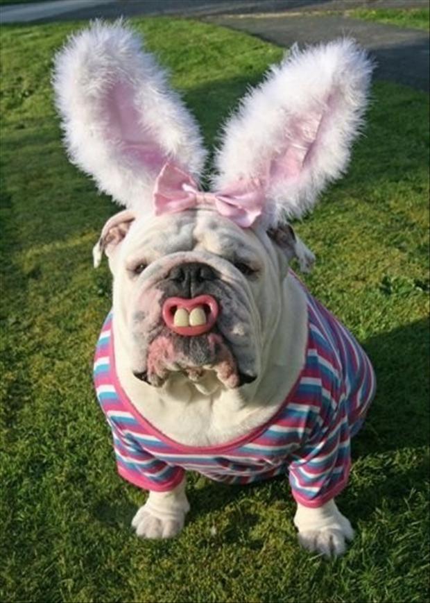 Cute Baby Polar Bear Wallpaper Easter Bunny Impersonators Cuteness Overflow