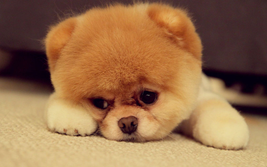 Cute Chubby Babies Wallpapers Cute Puppy Eyes That Will Melt Your Heart Cuteness Overflow