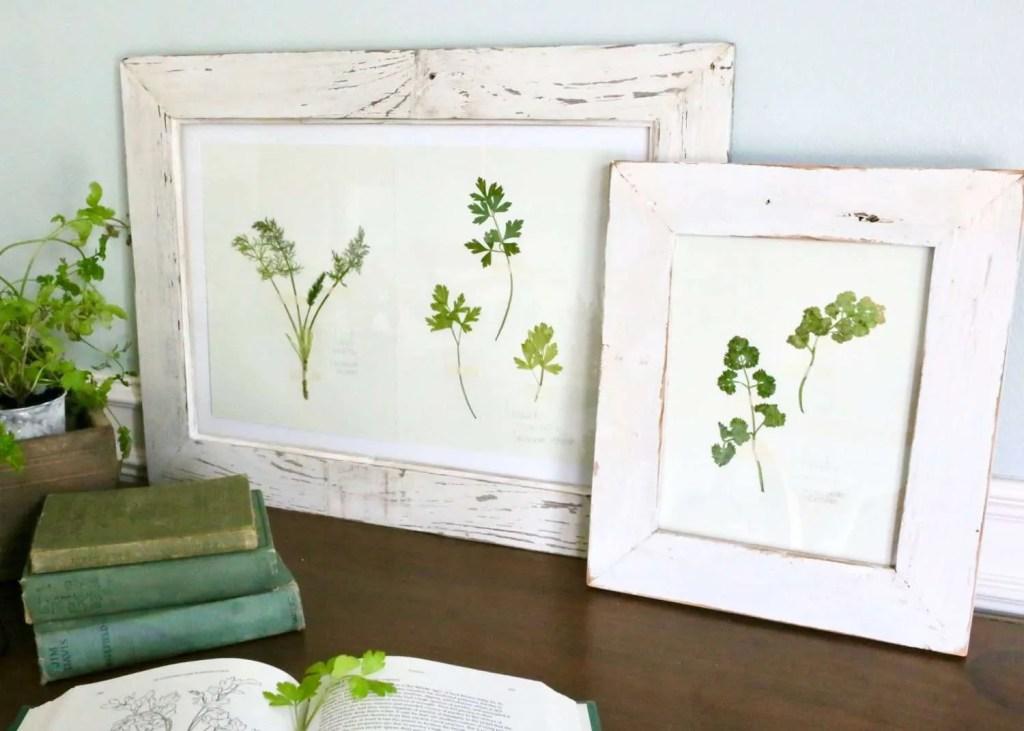 frame DIY pressed plants