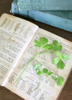 pressed herbs in old books