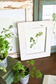 framed pressed herbs