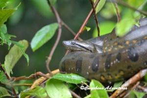 Cuyabeno, Tour, Ecuador, Jungle