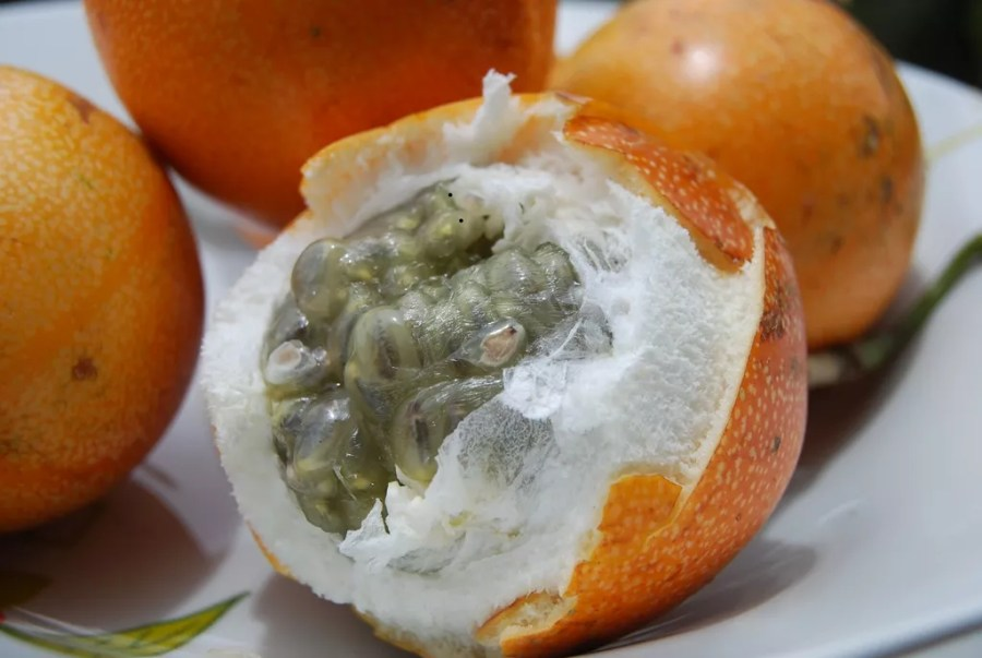 Image result for granadilla fruit