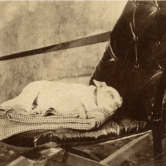 Cheap Ghost Chair Sling Back R.i.p. Man's Best Friend Post-mortem Photography Part Iii