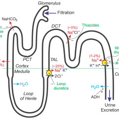 Nephron Diagram From A Textbook Ford Transit Wiring 2005 Cv Pharmacology Diuretics