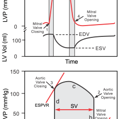 Heart Sounds Diagram 1990 Ford F150 Wiper Motor Wiring Cv Physiology: Ventricular Pressure-volume Relationship