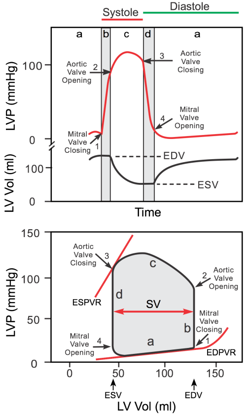 small resolution of ventricular pressure volume loops