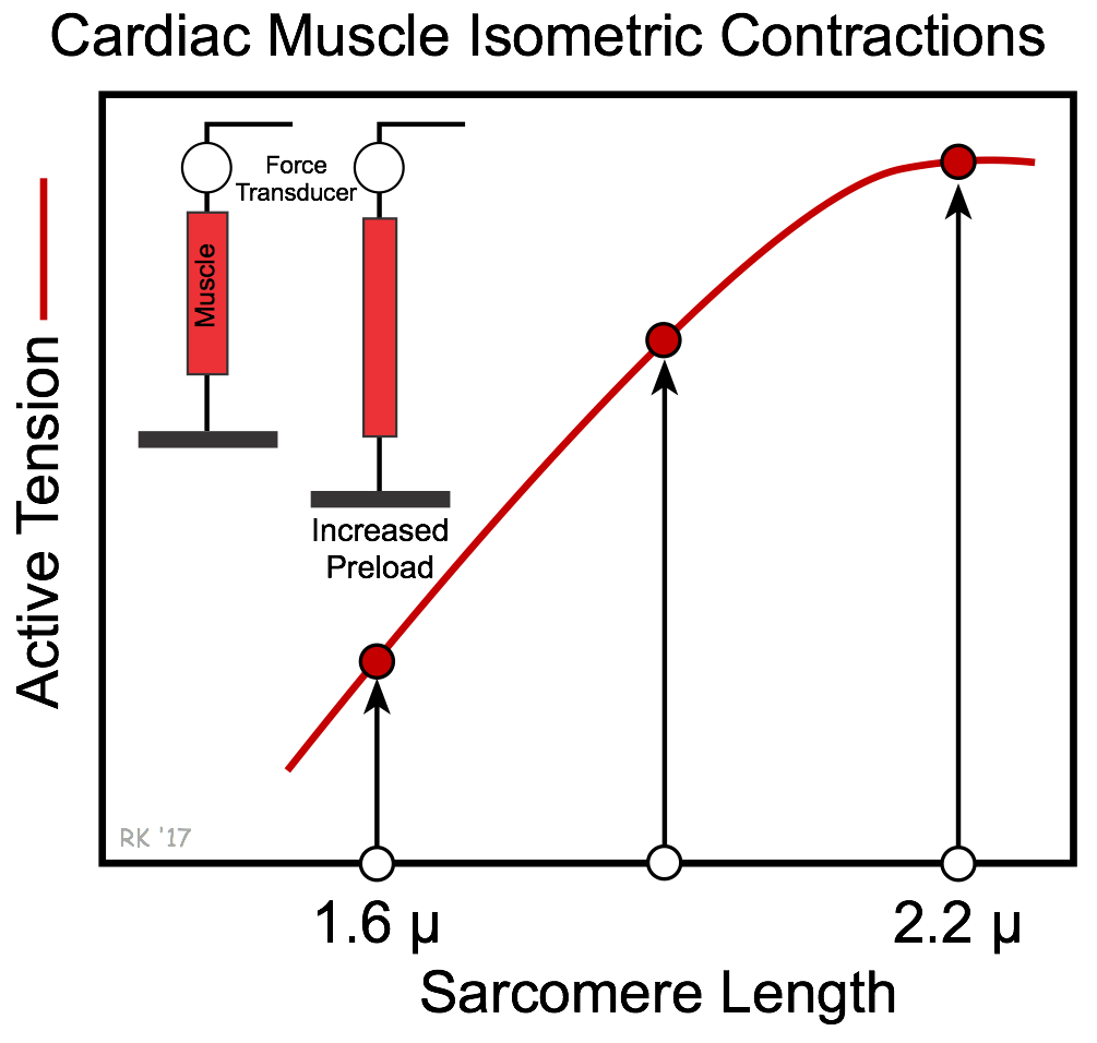 hight resolution of cardiac muscle length tension relationship