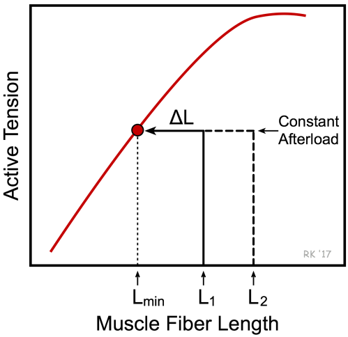 small resolution of effects of preload on muscle shortening using length tension diagram