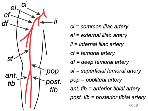 small resolution of leg arterial anatomy