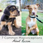 7 Common Misconceptions About Rescue