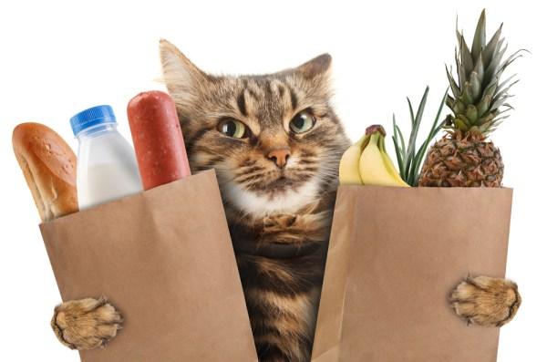 customer experience cat story