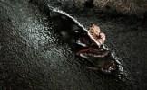 Das erste Bild der Herbstfotografie Reihe - man sieht ein Blatt im Wasser, welches sich in der Einkerbung in einem Baumstamm gesammelt hat