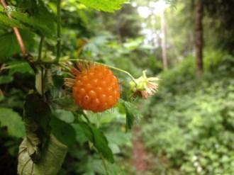 Salmonberry.