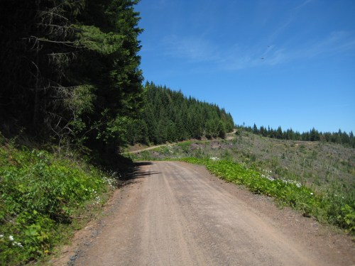 Winding along the ridgeline above the clearcut.