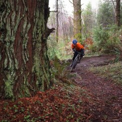 Singletrack rippin in Mckinleyville.