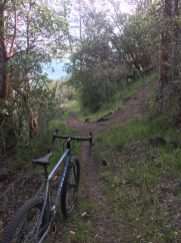 Climbing singletrack on Roxy Ann.