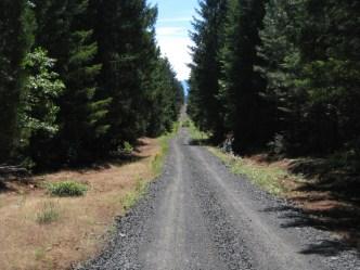 Railroad grade road near Butte Falls.