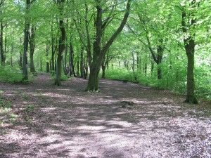 bowden housteads woods