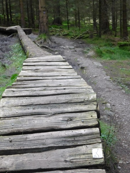 Technical features on the red loop at Gisburn Forest
